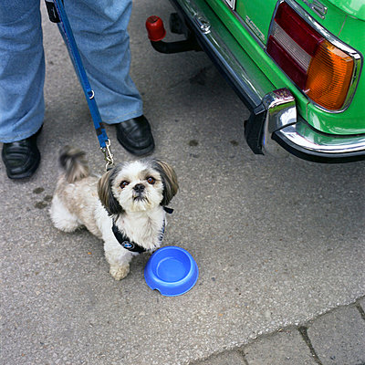Little dog by a car - p3420533 by Thorsten Marquardt