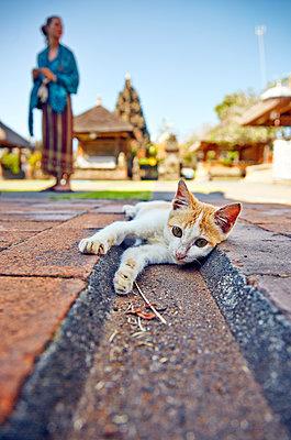Roaming cat on street - p704m1476104 by Daniel Roos