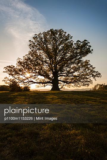 p1100m1153226 von Mint Images