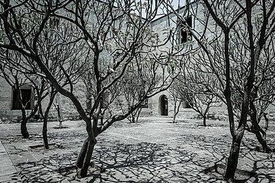 Trees in a courtyard - p1170m1584929 by Bjanka Kadic