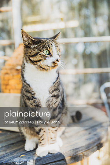 Portrait of tabby cat - p1640m2261143 by Holly & John