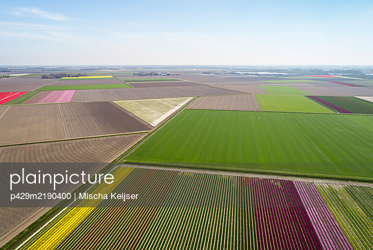 Early morning view of fields in coastal area of The Netherlands in spring. - p429m2190400 by Mischa Keijser