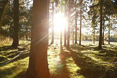Sonnenstrahlen - p249m1128740 von Ute Mans