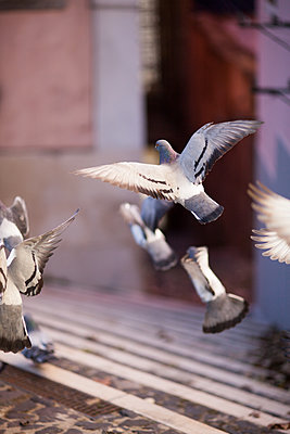 Doves - p795m1532012 by Janklein