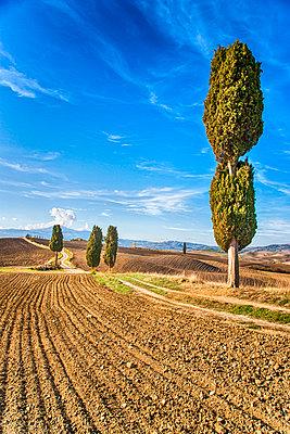 Landschaft - p1205m1515925 von Toni Anzenberger