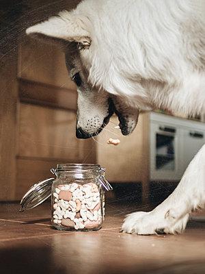 Dog eating - p1522m2280179 by Almag