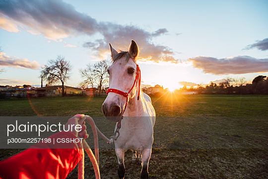 Male animal trainer training horse while standing at ranch during sunset - p300m2257198 by CSSHOT