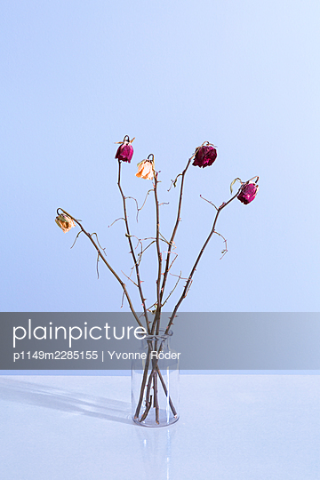 Withered roses - p1149m2285155 by Yvonne Röder