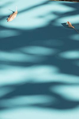 Fellow shadow - p596m1529002 by Ariane Galateau