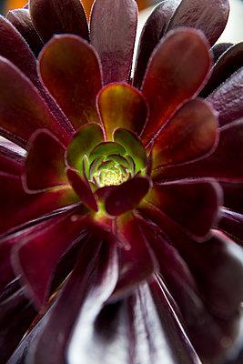 Close-up of purple blossom - p756m1461786 by Bénédicte Lassalle