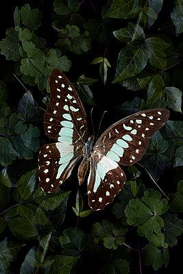Schmetterling im Wald - p1294m1559409 von Sabine Bungert