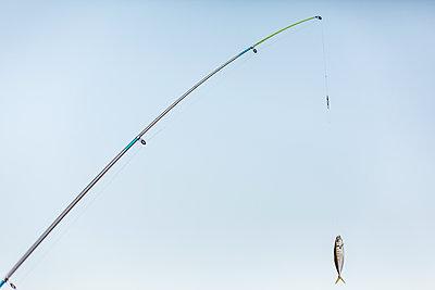 Fisch an der Angel - p1357m1486607 von Amadeus Waldner