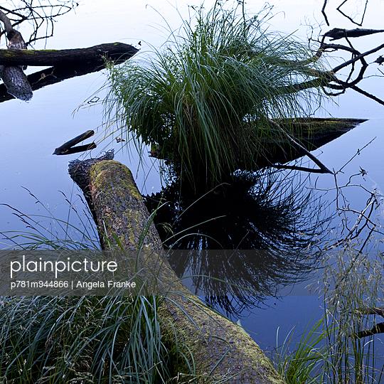 Wasserpflanzen - p781m944866 von Angela Franke