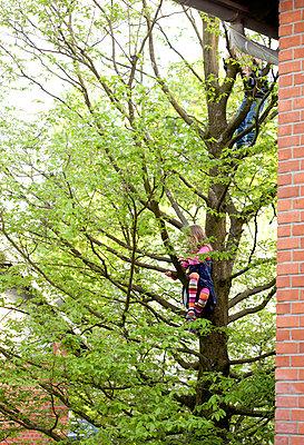 Climbing tree - p781m944849 by Angela Franke