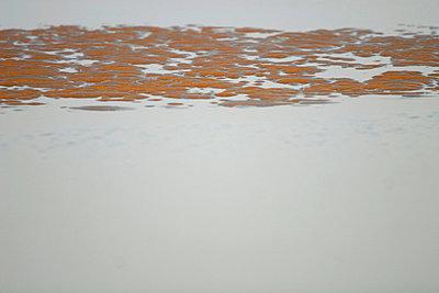 Sandstruktur und Schlick - p4170004 von Pat Meise