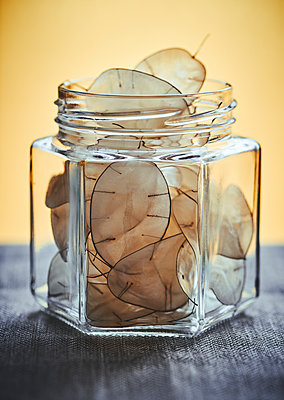 Lunaria leaves in preserving jar - p968m2020198 by roberto pastrovicchio