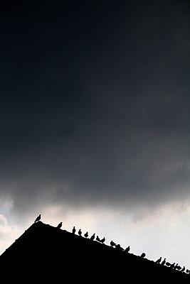 Doves on roof ridge - p039m1006731 by Christine Höfelmeyer