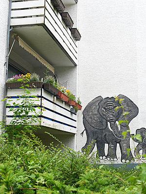 Elefant - p1164m1143425 von Uwe Schinkel