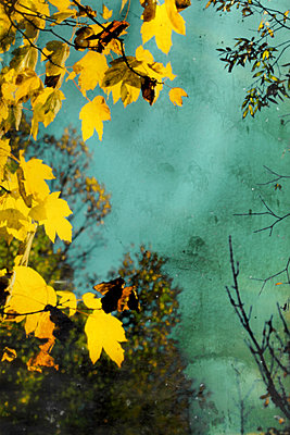 Autumn atmosphere - p450m1115921 by Hanka Steidle