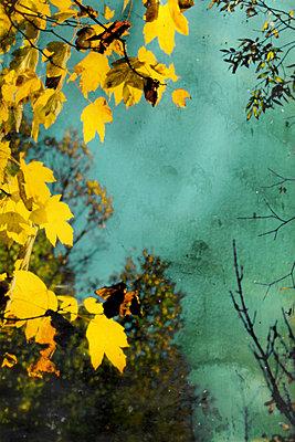 Herbststimmung    - p450m1115921 von Hanka Steidle