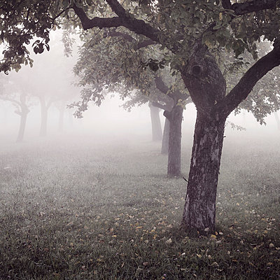 Fog - p992m946228 by Carmen Spitznagel