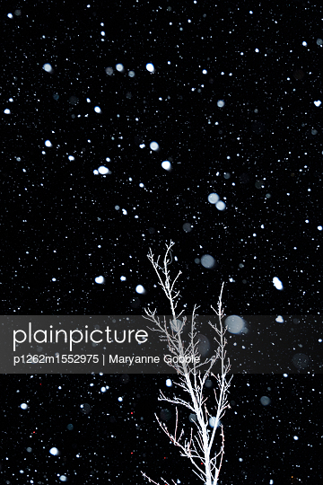 Snow at Night - p1262m1552975 by Maryanne Gobble