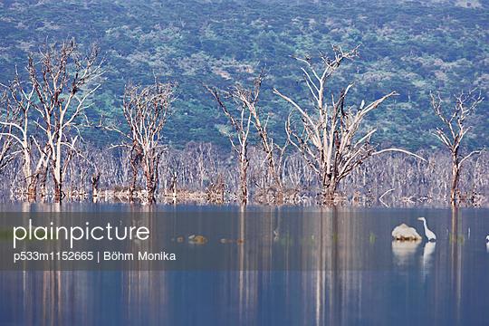 Überschwemmtes Gebiet am Nakurusee - p533m1152665 von Böhm Monika
