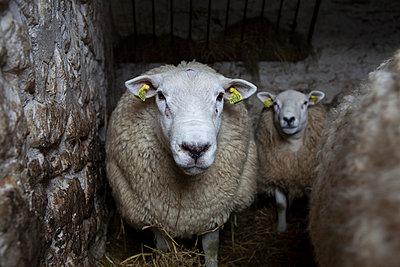 Tierhaltung - p1058m817172 von Fanny Legros