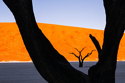 Deadvlei - p1065m885977 by KNSY Bande