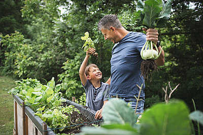 Happy father and son harvesting root vegetables from raised bed in garden - p300m2220994 by Epiximages