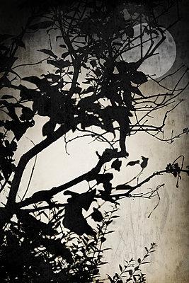 Mondschein    - p450m1052018 von Hanka Steidle