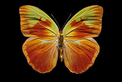flying orange - p587m1575102 von Spitta + Hellwig
