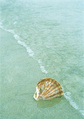 Seashell sticking in sand - p62316718f by Michele Constantini