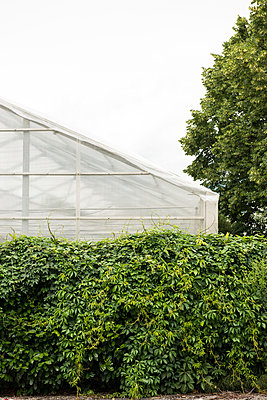Greenhouse - p954m934358 by Heidi Mayer