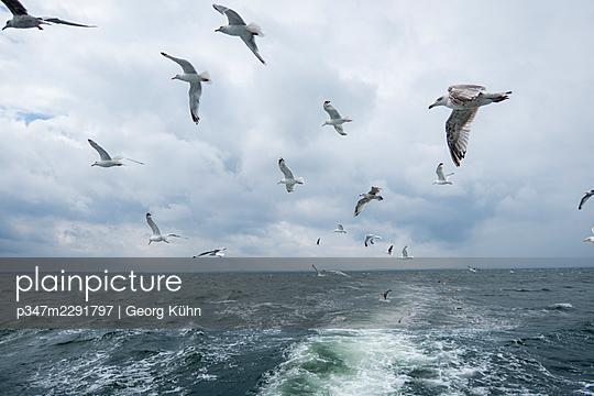 Seagulls behind a trawler - p347m2291797 by Georg Kühn