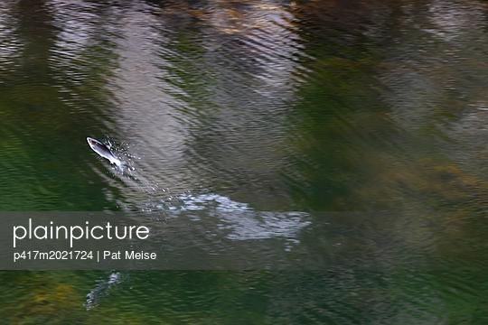 Fliegender Fisch - p417m2021724 von Pat Meise