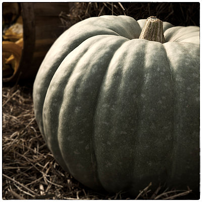 Furrowed Pumpkin - p1154m1057867 by Tom Hogan