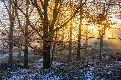 Sunlight shining through trees - p312m1470360 by Mikael Svensson