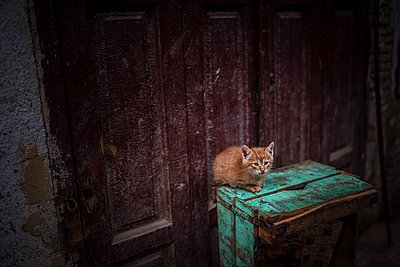 Red kitten on a wooden box - p1007m1216788 by Tilby Vattard