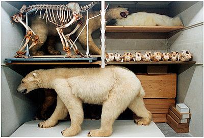 Eisbären - p1205m1020918 von Annet van der Voort