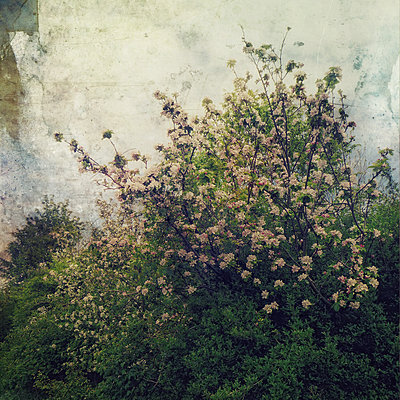 Bush In Bloom - p1633m2211085 by Bernd Webler