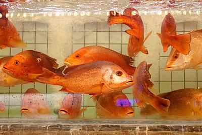 Goldfishes - p631m913011 by Franck Beloncle
