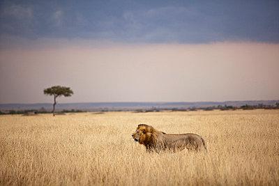 Kenia Masai Mara - p7450056 by Reto Puppetti