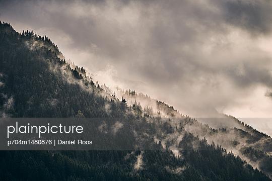 Wald in Nebelschwaden - p704m1480876 von Daniel Roos