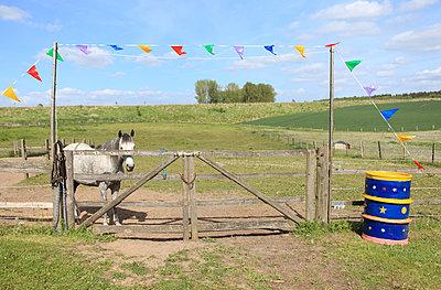 Pferd auf Weide - p045m1031231 von Jasmin Sander