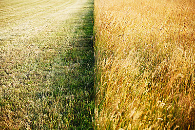 Agriculture - p1006m1051164 by Danel