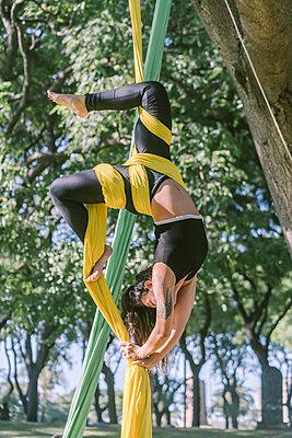 Aerial Silks Performer Hanging On A Tree - p1166m2106803 by Cavan Images