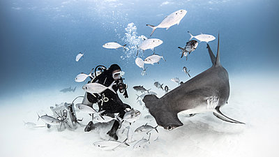 Underwater view of diver photographing great hammerhead shark from seabed, Alice Town, Bimini, Bahamas - p924m1580663 by Ken Kiefer 2