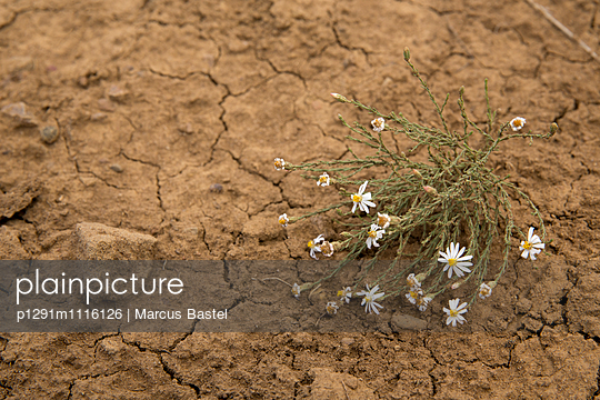 Flowers - p1291m1116126 by Marcus Bastel