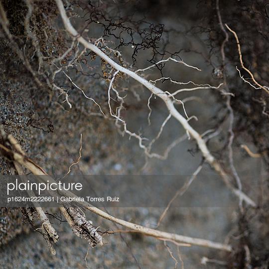 Fine roots - p1624m2222661 by Gabriela Torres Ruiz